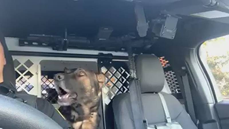 Shaker Heights singing K9 puts on a show to Eric Church's 'Springsteen'