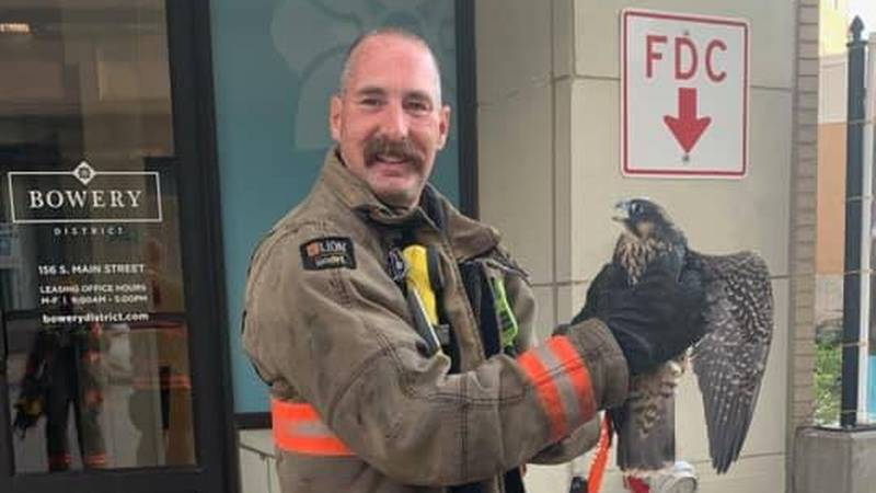 Hawk rescued from Akron apartment building after being trapped in vertical shaft for 2 days