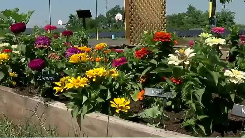 First-ever Great Parks Urban Farming Festival happening this weekend