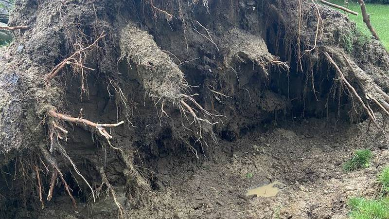 A line of severe thunderstorms knocked down trees and power lines around southern Genesee and...