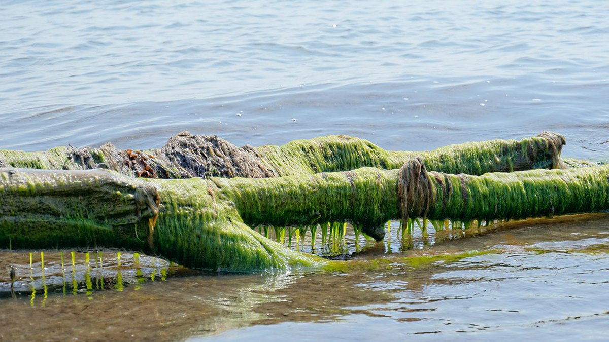 According to the National Weather Service, 2019 algal blooms on Lake Erie are expected come...