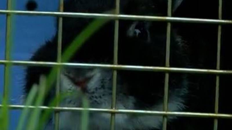 More than 40 rabbits were dumped at Smith Park in Middletown.
