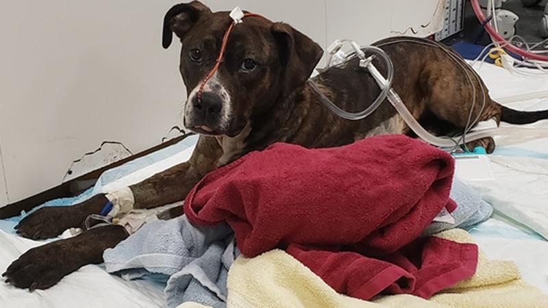 Dog shot by police Sunday at vet