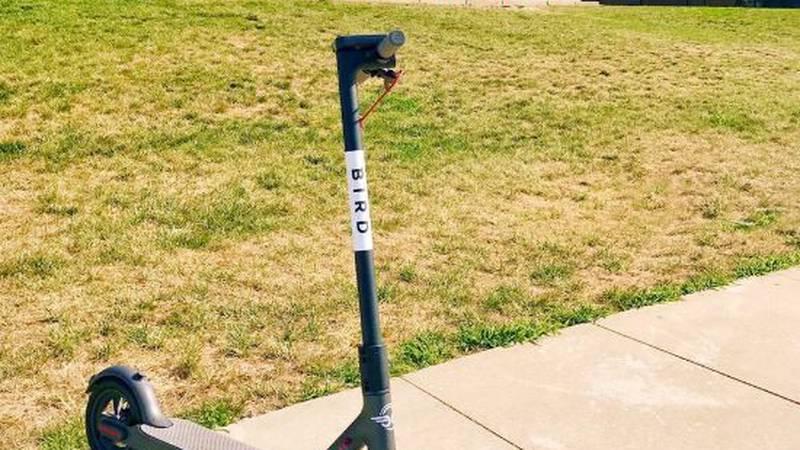 Bird electric scooters have arrived in Cincinnati. (Source: @BirdRide)