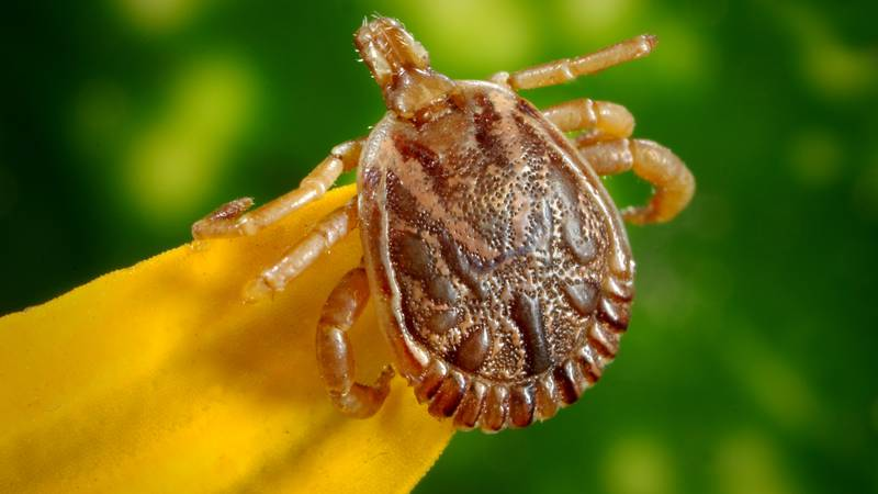 Warmer temperatures mean an increased likelihood of getting a tick bite, and those bites can...