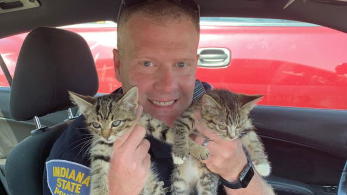 Sgt. Wheeles with ISP's Versailles Post found some kittens along the interstate on Wednesday,...