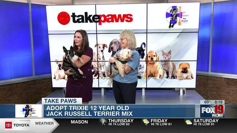 Take Paws: Adopt A Stray