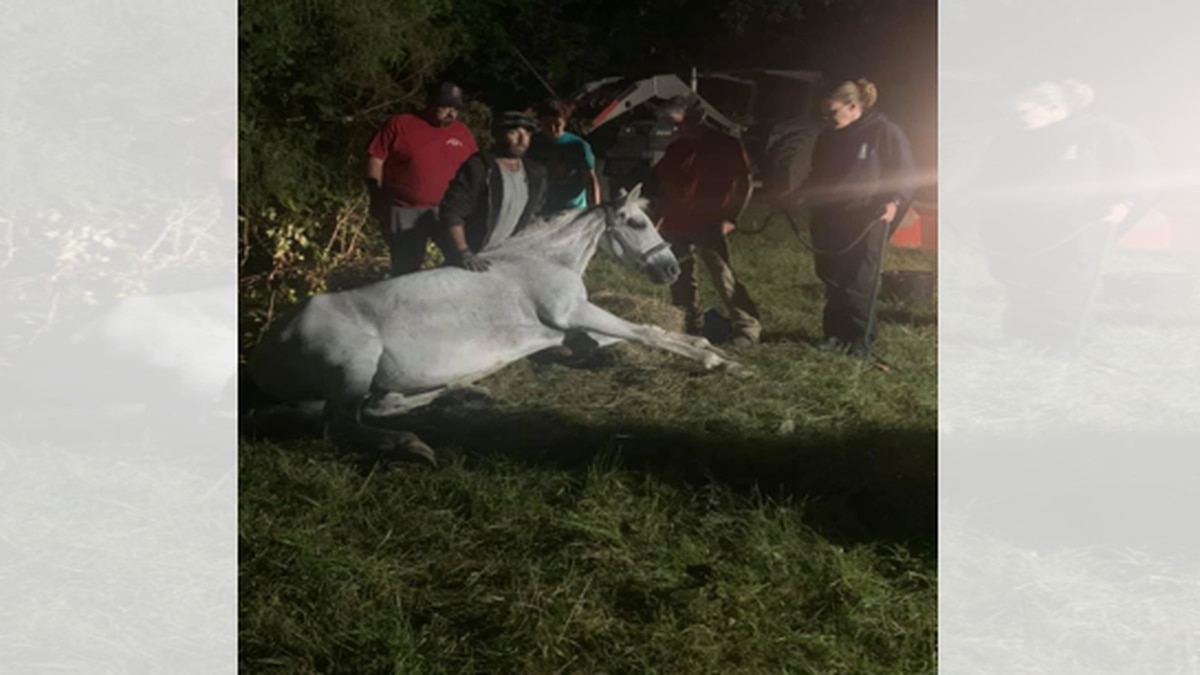 The horse is thought to be around 23 years old.