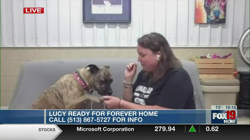 Meet Lucy from the Animal Friends Humane Society