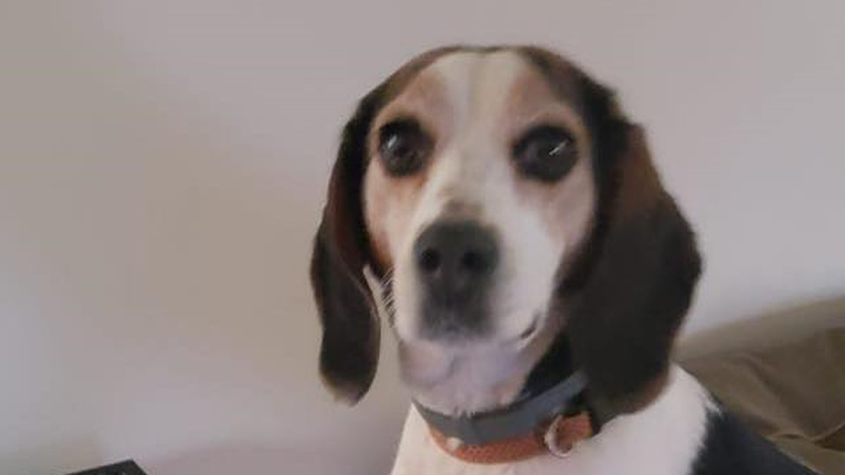 Trouble, a pet female beagle, was found decapitated by her family in East Palestine on Jan. 5.
