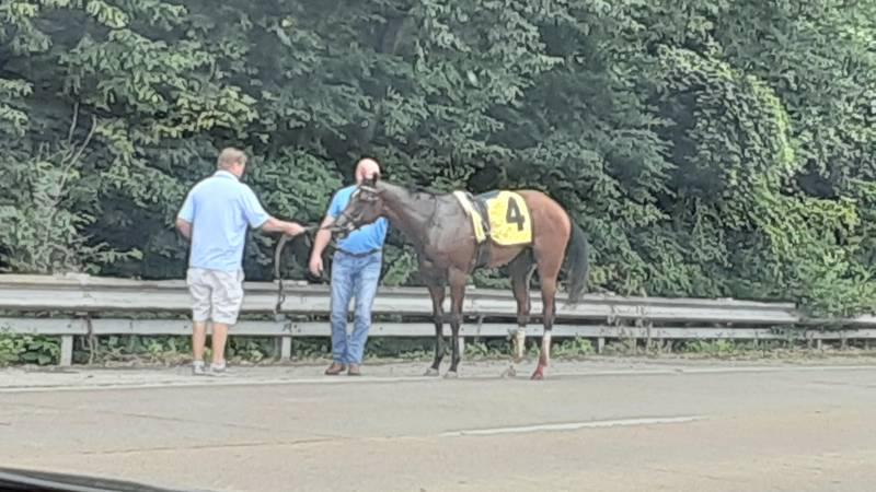 Horse escapes Ellis Park