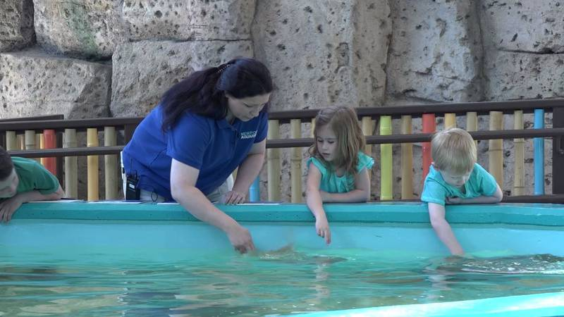 The Newport Aquarium announced their newest experience Friday that will give guests a chance to...