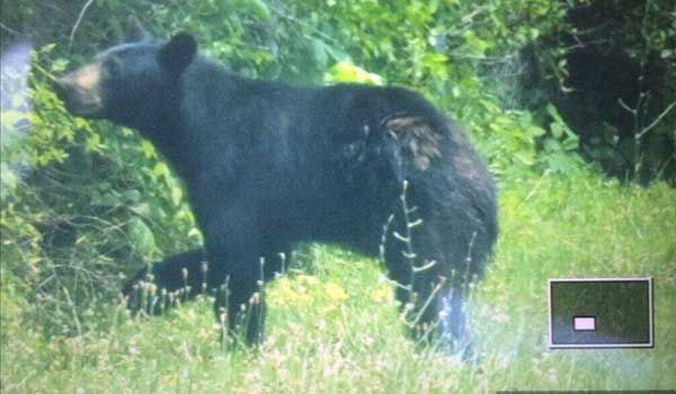 This is the black bear that's been seen in Miami Township in Clermont County. Photo from...