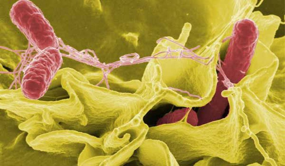 The Centers for Disease Control and Prevention said a multi-state salmonella outbreak has been...
