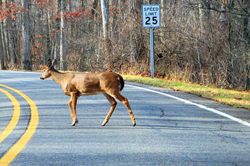 October through December are the times of the year when crashes involving deer tend to increase.