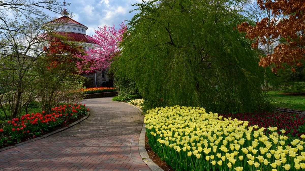 Another way to enhance your tulip viewing experience is with the zoo's new Zoo Blooms Walking...